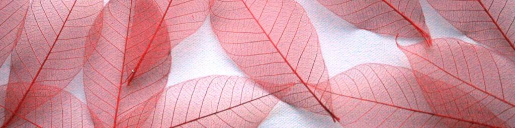 Red scatter of skeleton leaves