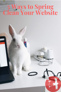 clean white rabbit on a desk